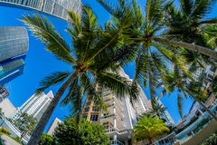 Downtown Miami. Fish eye view of the Brickell Key area in downtown Miami along Biscayne Bay Stock Image