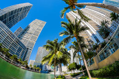 Downtown Miami Royalty Free Stock Image