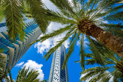 Downtown Miami. Skyline view of the Brickell area in downtown Miami with palm trees and skyscrapers Royalty Free Stock Photos