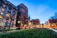 downtown mount vernon at night shot from the red tulip garden in royalty free stock photography