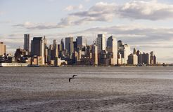 Downtown NYC with seagull Royalty Free Stock Images