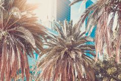 Downtown; Palms and skyscrapers in the city of Los Angeles. Vintage toning. Downtown; Palms and skyscrapers in the city of Los Angeles. toning royalty free stock photography