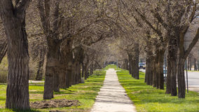 Downtown Regina. An empty pedestrian walkway in Downtown Regina, with trees and mowed grass on each side Stock Photo