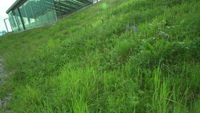 Downtown Vancouver Green Roof  close up 4K. UHD. A dolly shot close up of the grass on the Vancouver Convention Center's environmentally friendly, 6 acre stock video footage