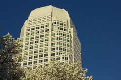 Downtown Winston-Salem. The Wells Fargo Center in Winston-Salem, North Carolina from Corpening Plaza with the Bradford Pear trees in blossom Royalty Free Stock Photos