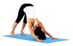 Downward facing dog Royalty Free Stock Photography