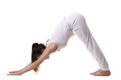 Downward facing dog yoga pose Royalty Free Stock Photos