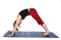 Downward Facing Dog yoga position Stock Images