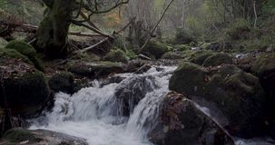 Downward movement from a tree near the river to the river`s course. In the north of Spain stock footage