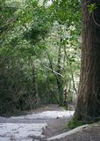 Downward Path. Path downhill with a large tree on the right of the image Royalty Free Stock Images