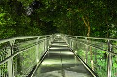 Downward walkway surrounded by trees Royalty Free Stock Photos