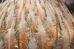 Downy on top of cycads Royalty Free Stock Photo