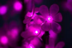 Dowodzeni światła w postaci kwiatów Zdjęcie Royalty Free