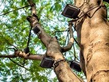 DOWODZENI światło reflektorów instalujący na dużym drzewie obraz stock