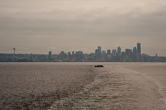 Dowtown西雅图地平线 库存照片
