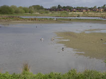 Doxey Marshes Stock Photo