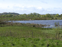 Doxey Marshes Royalty Free Stock Images