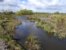 Doxey Marshes Royalty Free Stock Photo