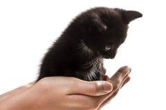 Doy un pequeño gatito en buenas manos Fotos de archivo libres de regalías