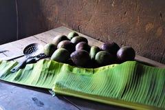 Doze abacates recentemente escolhidos em uma tabela de madeira imagens de stock