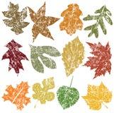 Doze folhas de Grunge Fotografia de Stock