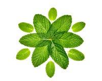 Doze folhas de hortelã no teste padrão Imagens de Stock