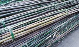 Dozen bamboo Royalty Free Stock Photos