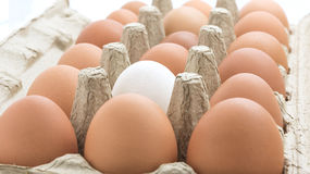 Dozen Chicken Eggs in Carton. Stock Photo