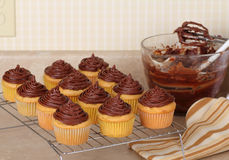 Dozen Cup Cakes Stock Images