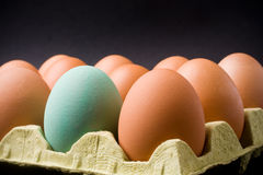Dozen eggs Stock Images