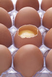 Dozen Eggs Royalty Free Stock Photo