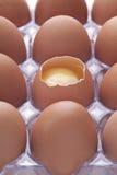 Dozen Eggs Royalty Free Stock Photo
