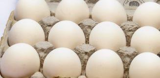 Dozen eggs in carton. A closeup view of a dozen white eggs in an egg carton Royalty Free Stock Photo