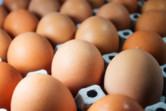 Dozen of Eggs. Focused on an egg. Pattern and background use Stock Photos