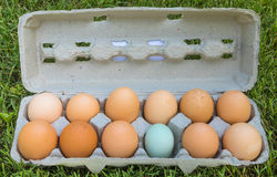 A dozen eggs - one of these things is not like the others Royalty Free Stock Photos