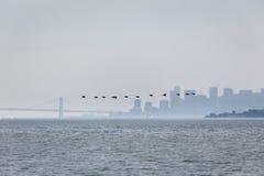 A dozen flying birds  in foreground of San Francisco Skyline Stock Photos