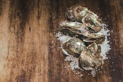 Dozen fresh oysters on the wooden and sea salt. Top view.  Royalty Free Stock Image