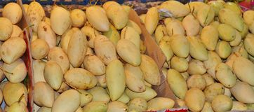 Dozen met gele Thaise mango Royalty-vrije Stock Fotografie