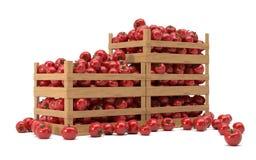 Dozen met tomaten Royalty-vrije Stock Afbeeldingen