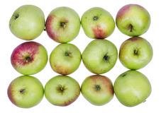 A dozen ordinary green  apples Stock Photos