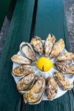 A dozen oysters on a plastic plate Royalty Free Stock Photos