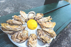 A dozen oysters on a plastic plate Stock Photo