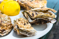 A dozen oysters on a plastic plate Royalty Free Stock Images