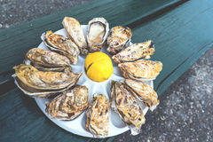 A dozen oysters on a plastic plate Royalty Free Stock Image