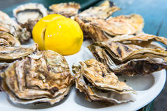 A dozen oysters on a plastic plate Stock Photography