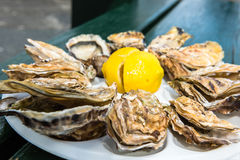 A dozen oysters on a plastic plate Royalty Free Stock Photo