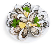 Dozen oysters on white plate Royalty Free Stock Image