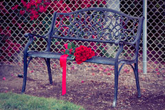 Dozen red roses lying on a bench Stock Photo