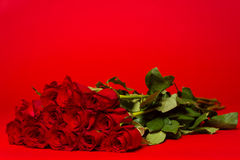 Dozen red roses on a red background Stock Photography