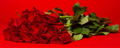 Dozen red roses on a red background Stock Photos
